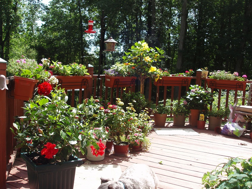 How To Prepare Large Planters For, How To Prepare Outdoor Planters