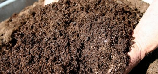 How to make your natural fertilizer?